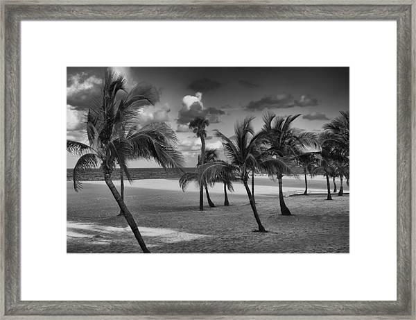 Beach Foliage Framed Print