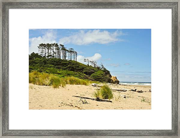 Beach Forest Framed Print