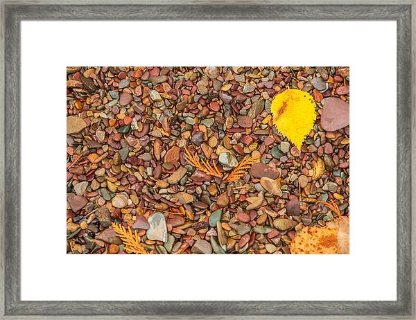 Beach Pebbles Of Montana Framed Print