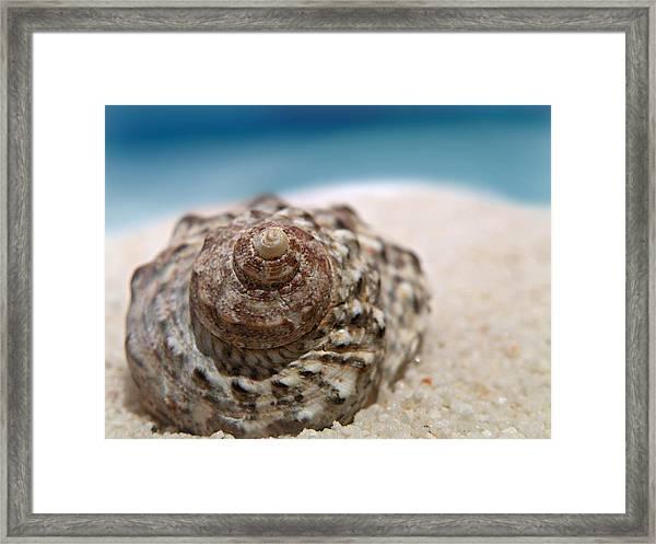 Beach Treasure Framed Print