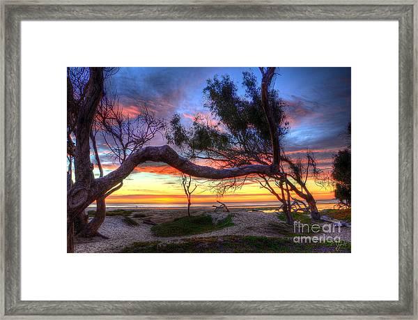 Beach Tree Sunset View Framed Print