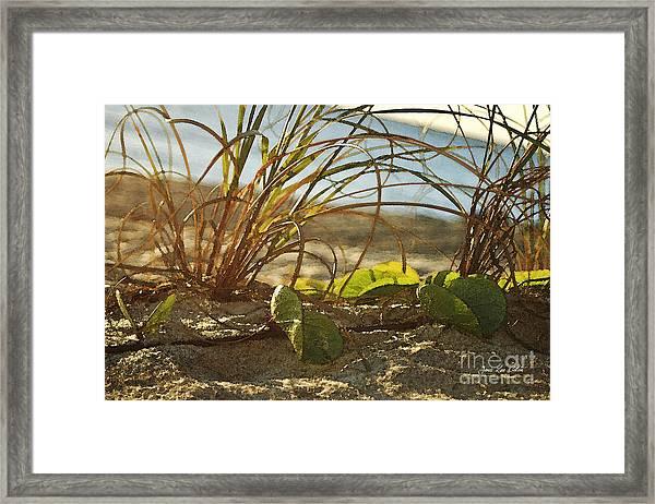 Beach Vine Framed Print