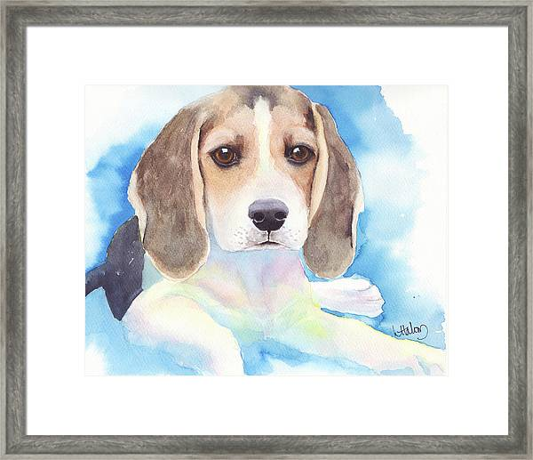 Beagle Baby Framed Print