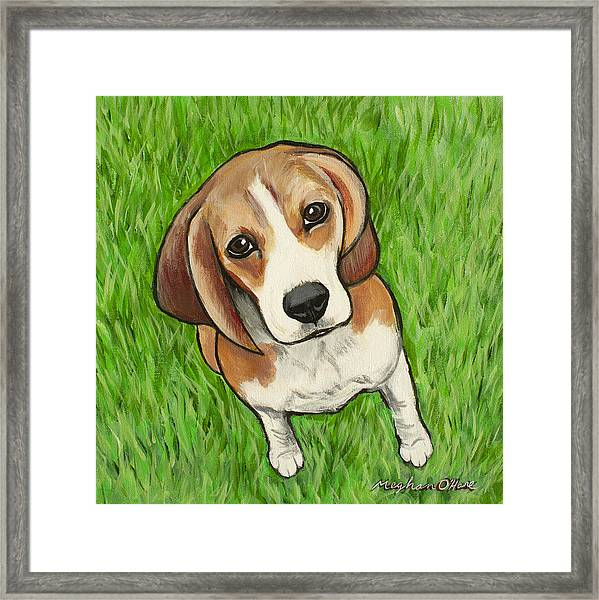 Framed Print featuring the painting Beagle  by Meghan OHare