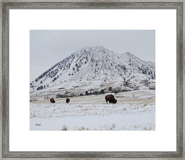 Bear Butte Buffalo Framed Print