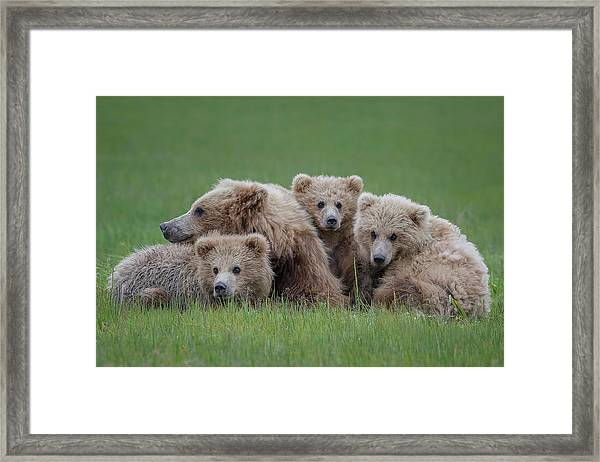 Bear Huddle Framed Print