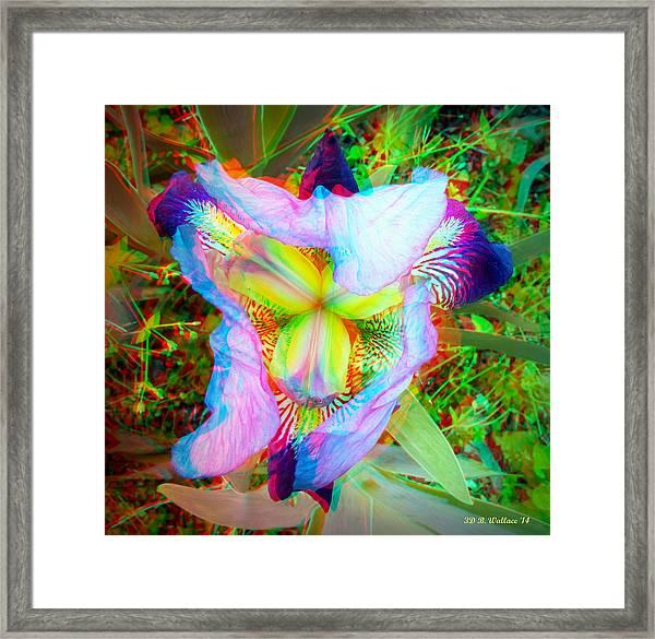 Bearded Iris Cultivar - Use Red-cyan 3d Glasses Framed Print