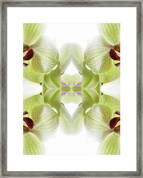 Beautiful, Finely Textured Orchid Framed Print