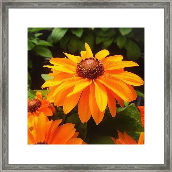 Beautiful Flower #iphone5 #instagram Framed Print