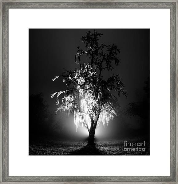 Beautiful Foggy Night 1 Framed Print