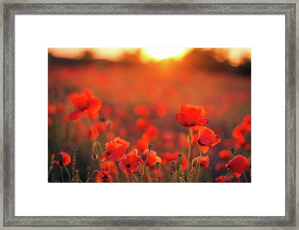 Beautiful Sunset Over Poppy Field Framed Print