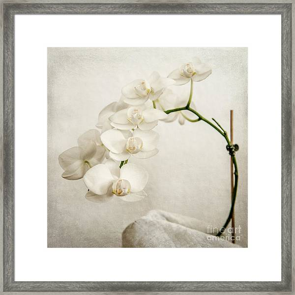 Beautiful White Orchid II Framed Print
