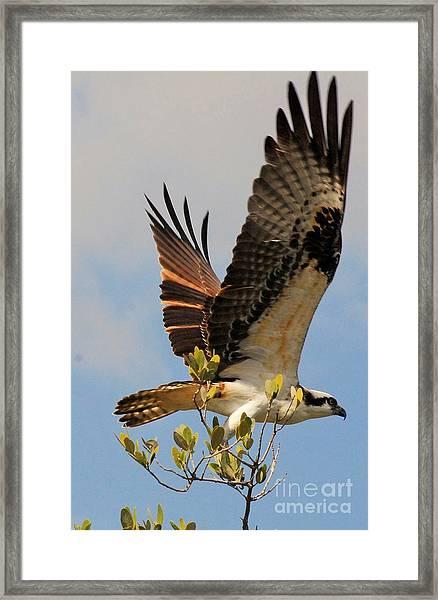 Beautiful Wings Framed Print
