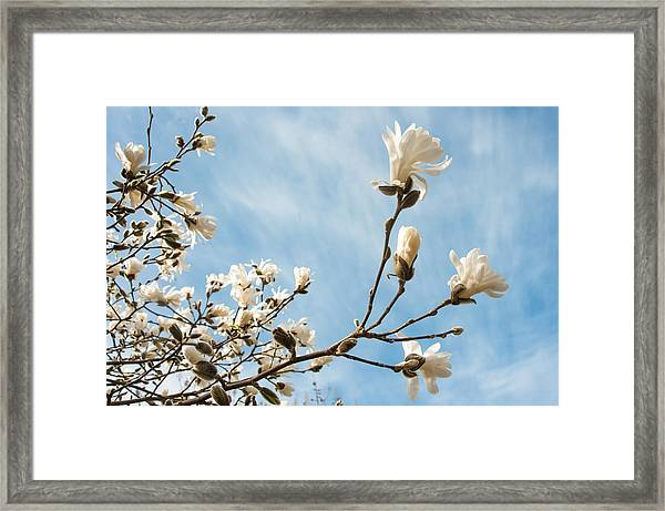 Beauty And Abundance Framed Print