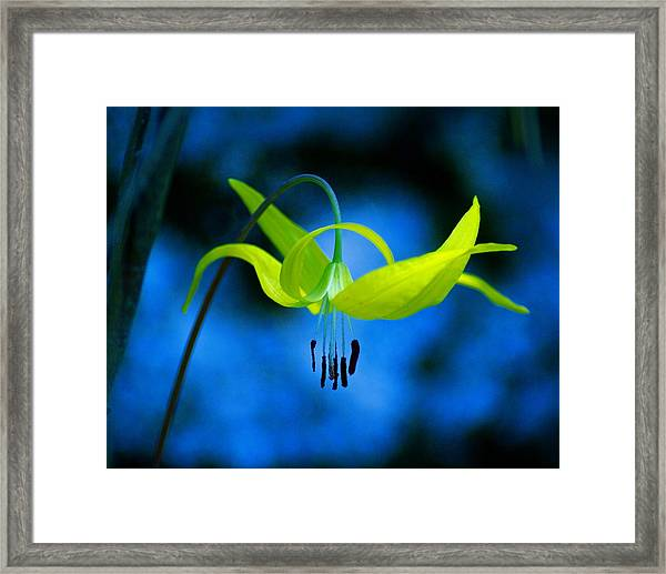 Beauty And Grace Framed Print