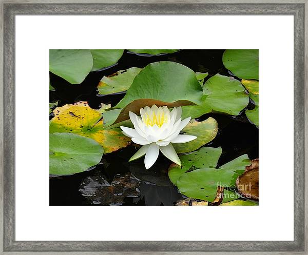 Beauty From The Deep Framed Print by Olivia Blessing