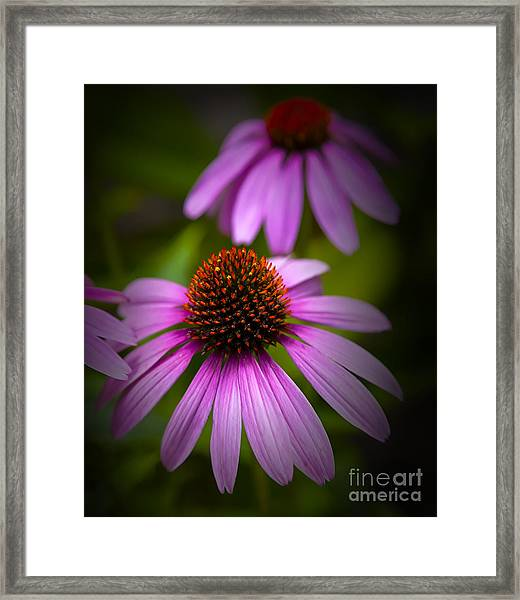 Beauty Of Life Framed Print