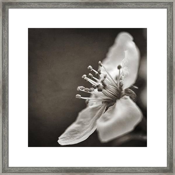 Beauty Vanishes Framed Print