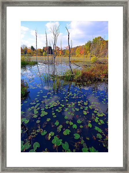 Beaver Marsh In Autumn Framed Print