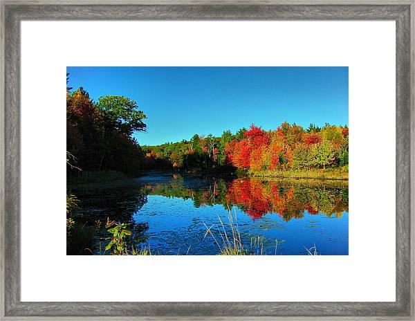 Beaver Pond Foliage Framed Print