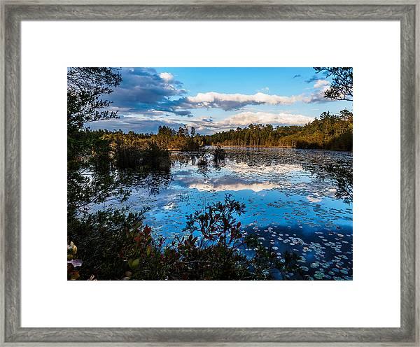 Beaver Pond - Pine Lands Nj Framed Print