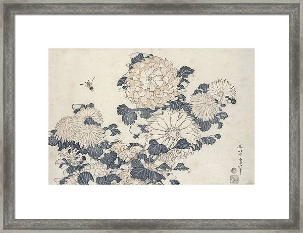 Bee And Chrysanthemums Framed Print