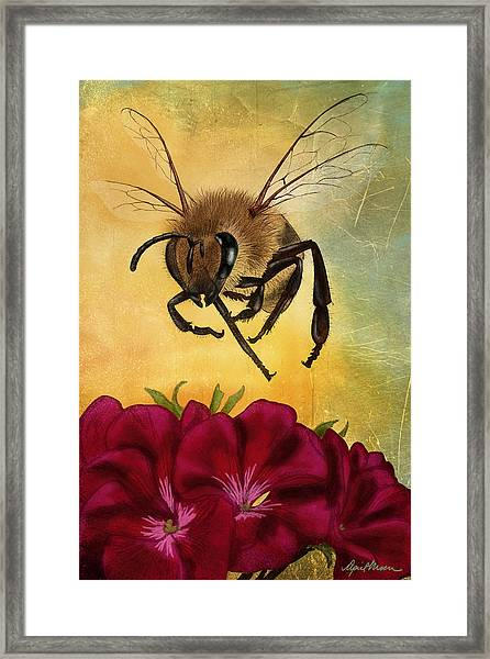 Bee I Framed Print