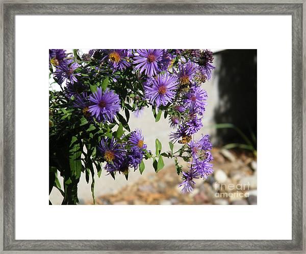 Bee On Purple Framed Print