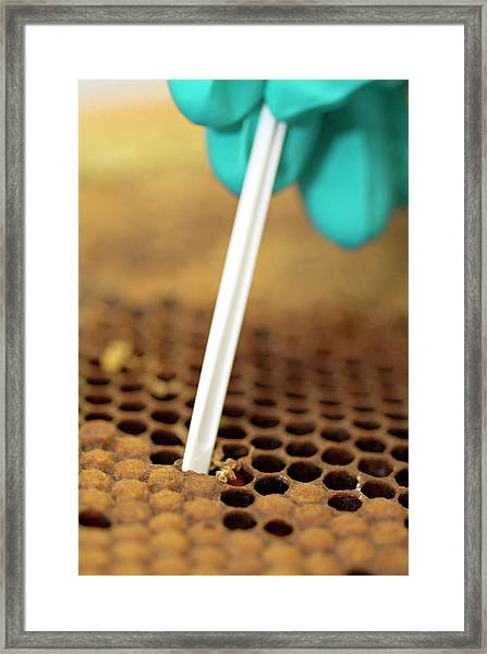 Bee Research Framed Print