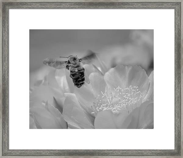 Bee Rising Framed Print