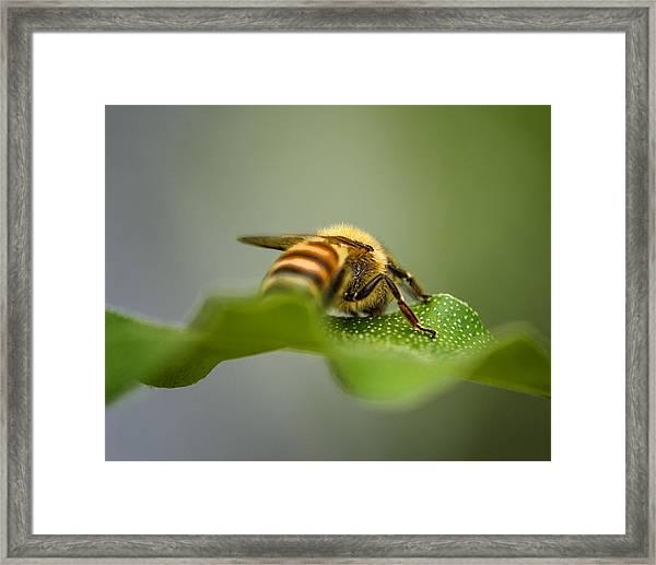 Bee Still Framed Print