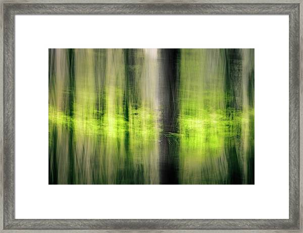 Beeches In The Spring Framed Print