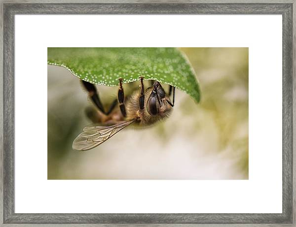 Beeing Upside Down Framed Print