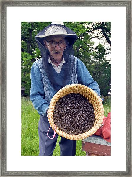 Beekeeper Collecting Swarming Honeybees Framed Print
