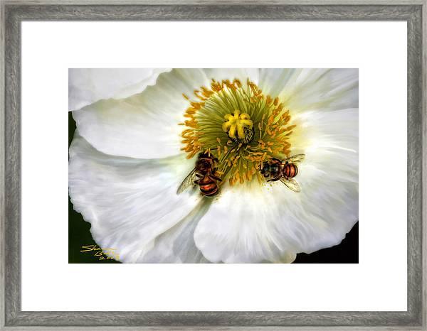 Bees On A Flower Framed Print