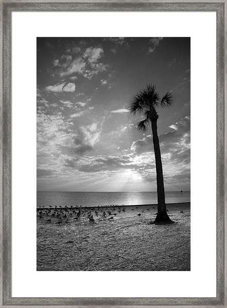 Before Sunset Framed Print