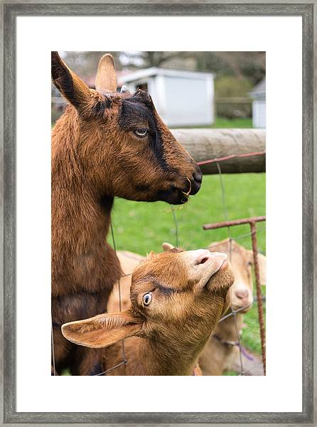 Framed Print featuring the photograph Begging For A Bite by Priya Ghose