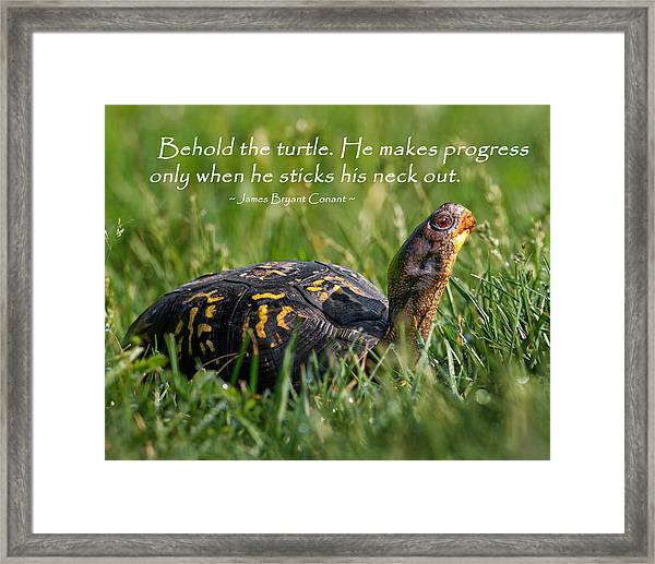Behold The Turtle Framed Print