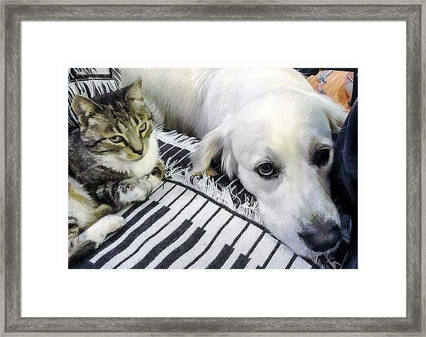 Bella And Peroni Framed Print
