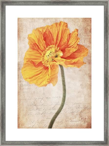 Bella Orange Framed Print