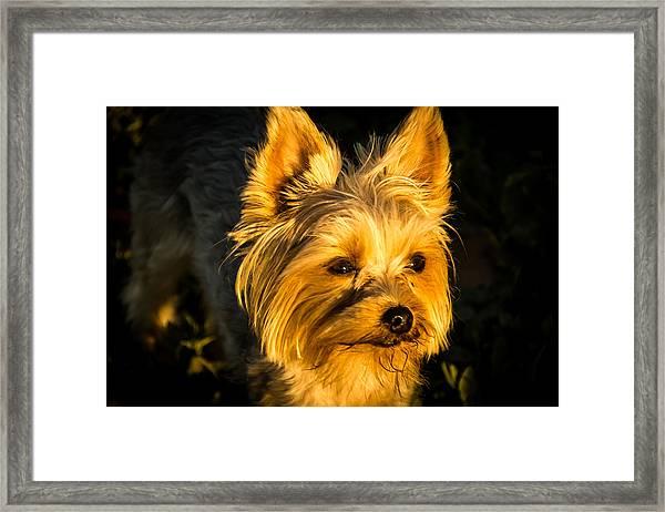 Bella The Wonder Dog Framed Print