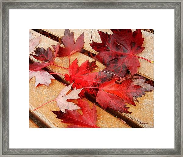 Bench Cushion Framed Print