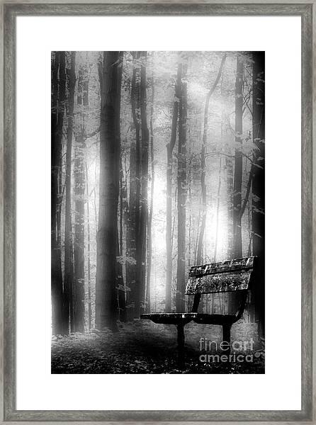 Bench In Michigan Woods Framed Print