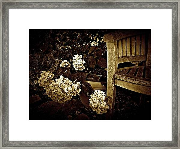 Bench With Hydrangeas Framed Print
