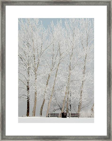Benches And Hoar Frost Trees Framed Print