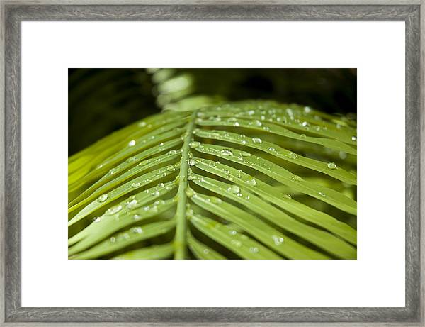 Framed Print featuring the photograph Bending Ferns by Carolyn Marshall