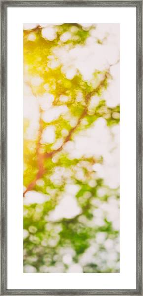 Beneath A Tree  14 5194  Diptych  Set 2 Of 2 Framed Print