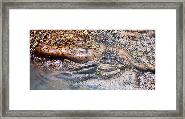 Beneath The Surface Framed Print by Debbie Cundy