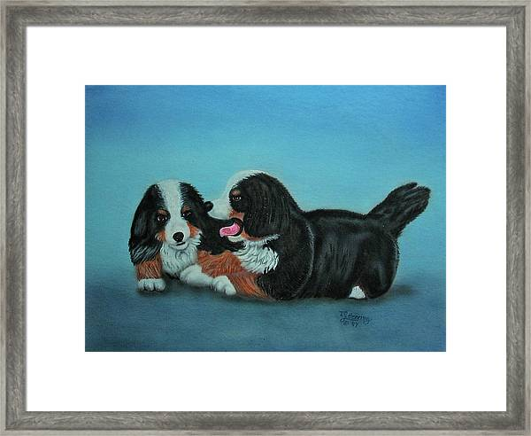 Bernese Mountain Puppies Framed Print