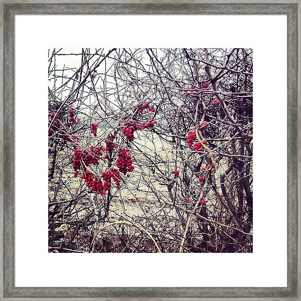 Berries In The Hedgerow Framed Print